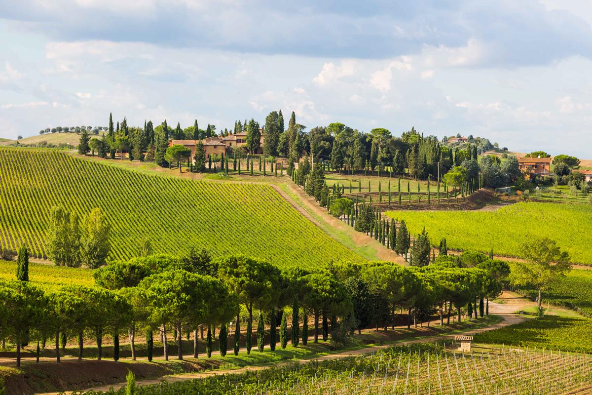 Carpineto Vino Nobile di Montepulciano